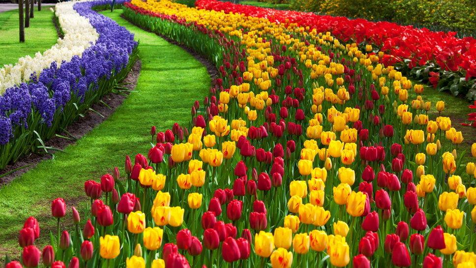 Los 10 jardines m s hermosos del mundo expertos en desinfecci n - Jardines de tulipanes en holanda ...